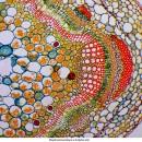 Биологический микроскоп Delta Optical Genetic Pro Bino (A) (Бинокулярный)