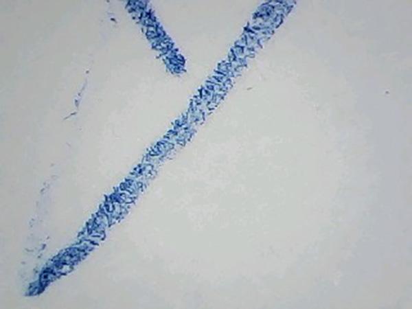 Бумага и ручка под микроскопом Levenhuk DTX 720 WiFi